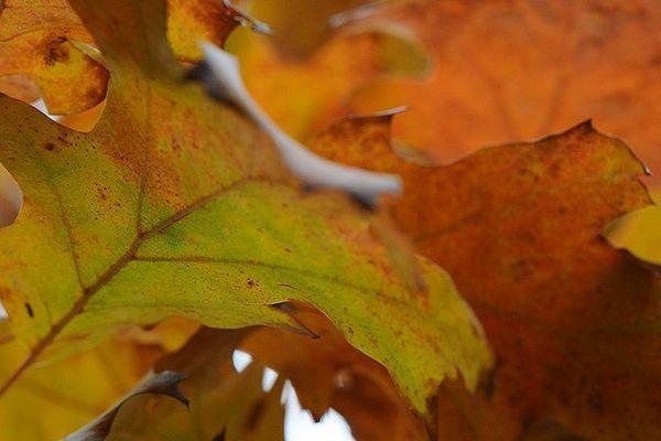 Les feuilles d'automne se ramassent à la pelle.