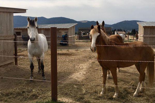 Les chevaux restent au paddock jusqu'à nouvel ordre.