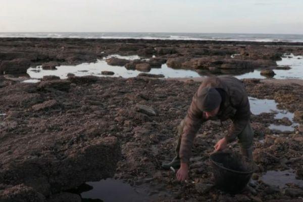 Après les fortes pluies dans la matinée du lundi 20 septembre, l'IFREMER suspecte une contamination des coquillages dans la région de Wimereux.