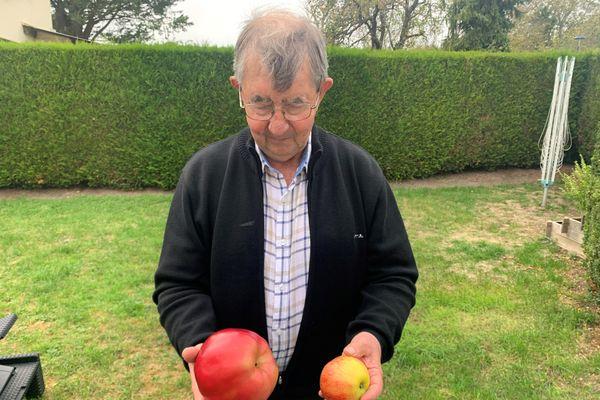 Daniel Cotrel, posant fièrement avec sa pomme d'1,868 kg (gauche) et un fruit de taille commune.