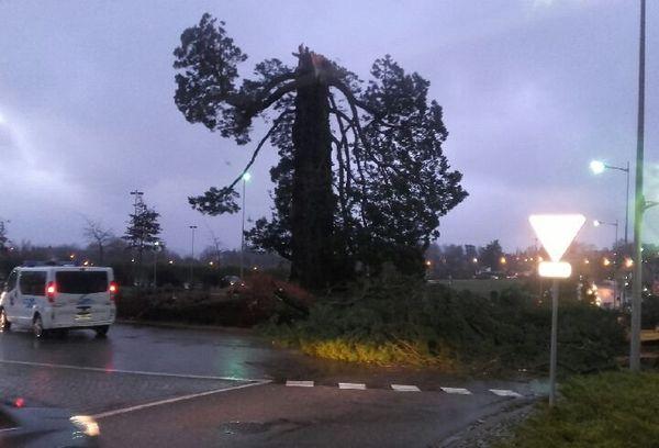 Arbre décapité par la tempête à Flers (Orne)