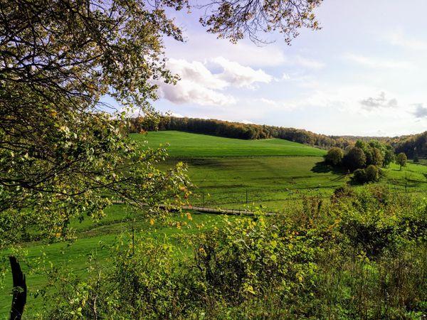 Parc national des forêts Champagne et Bourgogne