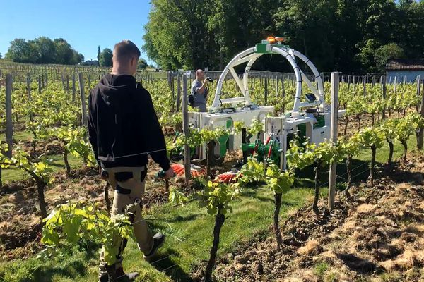 Ted est un tracteur robot en phase de test dans les vignes de Monbazillac, 90 000 euros pour le modèle de base...