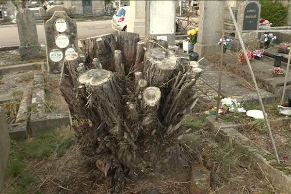Au départ un arbuste puis un arbre au cimetière de Louyat à Limoges en 2018
