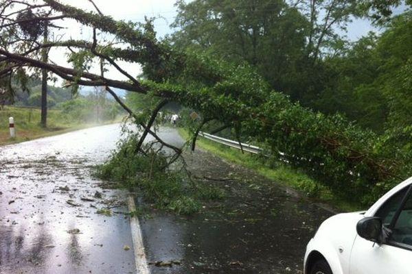 Les arbres sont tombés au niveau du kilomètre 23 sur la D2089 entre Lezoux et Thiers