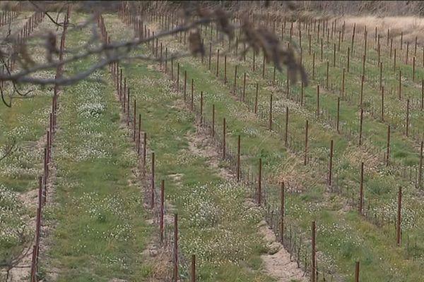 """Pour les défenseurs de l'environnement """"il ne s'agit pas d'un combat contre la viticulture mais contre ceux qui ne respectent pas les règles"""""""