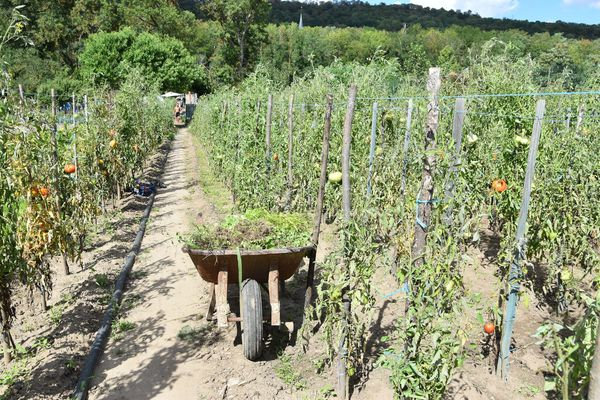 En juillet et en août Monsieur Romero passe plus de 15 heures par jours dans son jardin