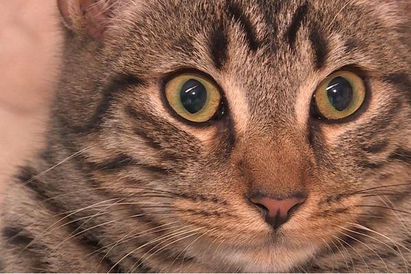 De nombreux chats et chatons errent ou sont abandonnés dans le secteur de Commercy.