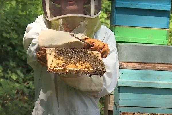 La douceur de l'hiver et les chaleurs du printemps ont favorisé le développement des colonies d'abeilles.