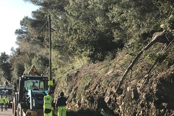 Sur la RM 2209, entre Gattières et La Gaude, des agents de la métropole coupent une dizaine de pins pour rendre l'accès aux voitures.
