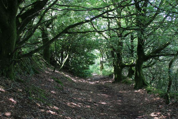 Autour de Locronan, les arbres ont parfois pris le dessus sur la lande, mais les chemins creux sont toujours là.