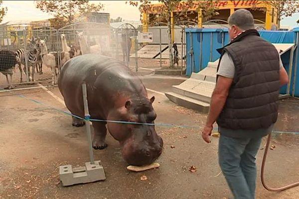 Jumbo l'hippopotame du cirque Muller