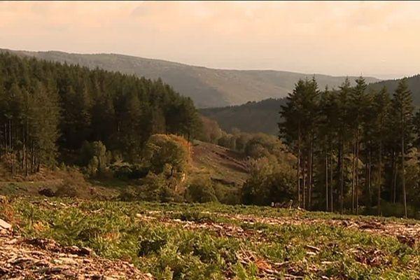 Ce massif forestier au coeur de la Montagne noire représente le tiers des volumes de bois exploités en Occitanie.