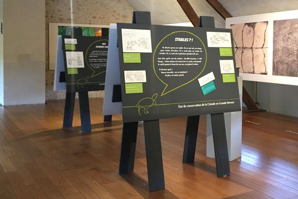 L'exposition la Cistude d'Europe en Brenne.