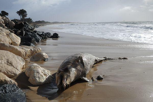 400 dauphins s'étaient échoués depuis début 2019 sur la côte atlantique.