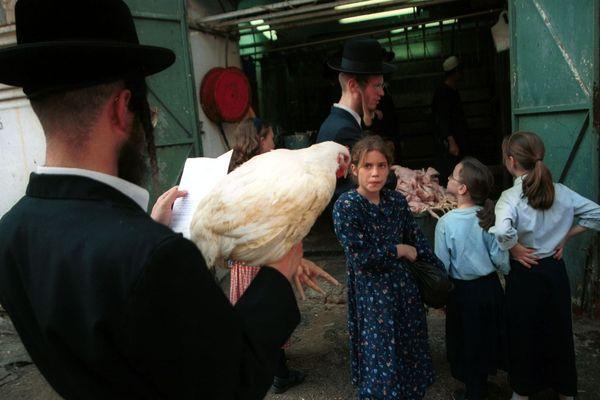 Un poulet blanc sacrifié pour le Yom Kippour.