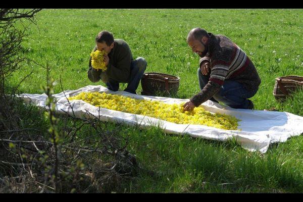 Paysans-herboristes, médecins phytothérapeutes, docteurs en pharmacie, sénateur et députée européenne, défendent un usage libre des plantes médicinales en France.