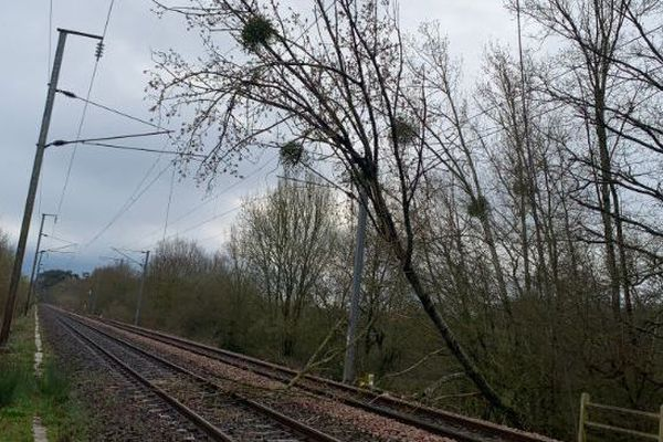 Des arbres sont tombés sur l'axe ferroviaire entre Rennes et Redon, perturbant la circulation des trains.