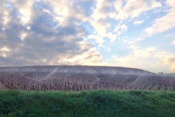Dans le Chablisien, des vignerons ont choisi la technique de l'arrosage pour protéger les bourgeons contre les gelées printanières.