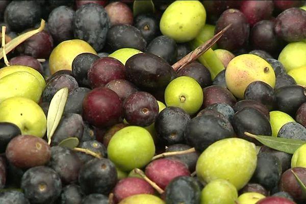 Les olives du Var sont toujours réputées.
