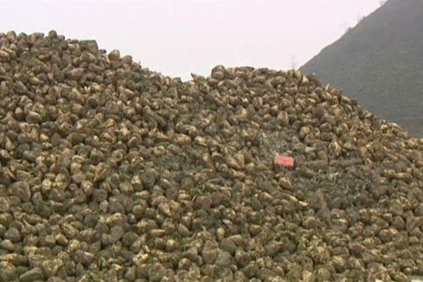 Les betteraves ont été volées sur cette zone de stockage située à Escaudain.