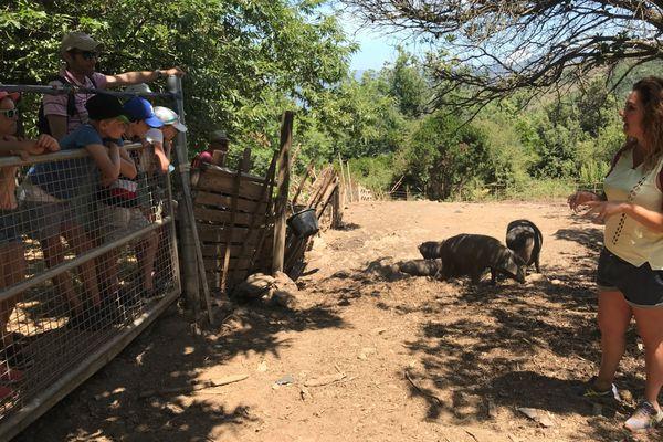 La jeune agricultrice a fait le choix de diversifier son activité: depuis plus de dix ans, elle s'est ouverte aux visites touristiques.