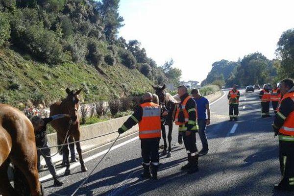 Une scène insolite : des chevaux pris en charge sur l'A8.