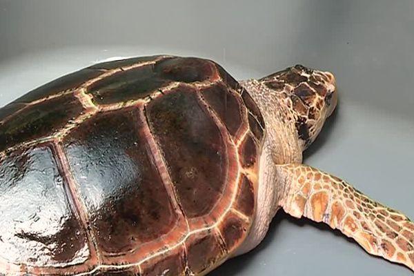 Le centre d'études et de sauvegarde des tortues de la Grande Motte a permis à une vingtaine d'enfants de se mettre dans la peau des soigneurs - 12 avril 2017