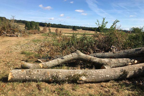 Les arbres ont été abattus sur décision de la municipalité.