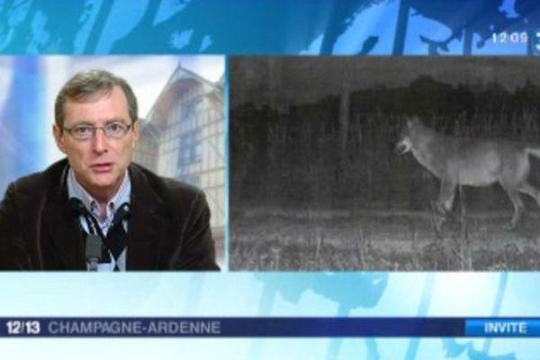 Face au retour du loup en Champagne-Ardenne, Jean-Marc Moriceau prône des mesures de compromis qui remettraient en cause le statut d'espèce protégée.