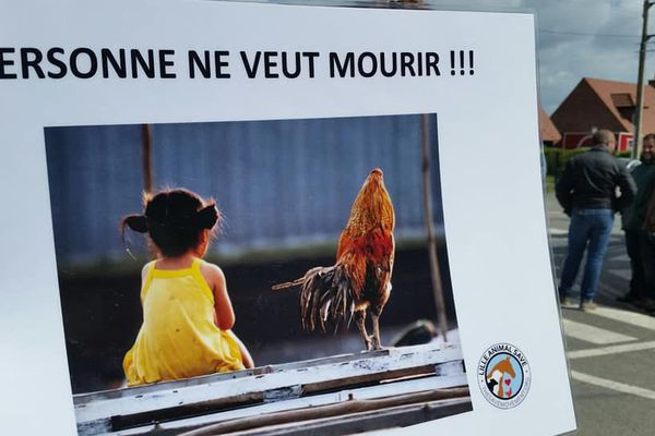 Les militants de la cause animale demandent la fin de l'exception légale autorisant les combats de coq