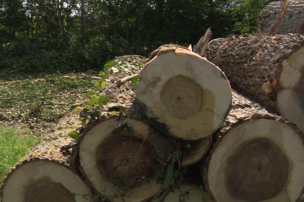 Une journée de sensibilisation à la gestion de la forêt