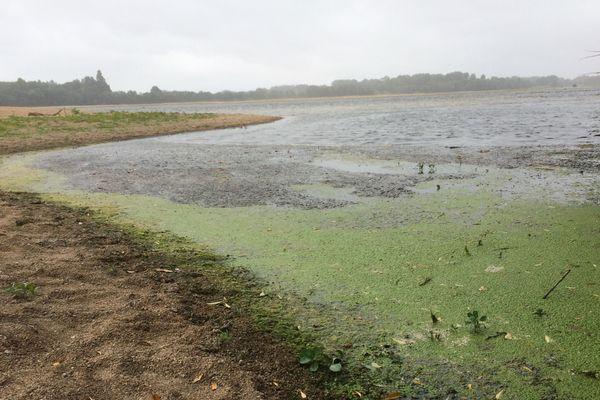 Trois chiens sont morts après s'être baignés dans la Loire à Montjean-sur-Loire et Mûrs-Erigné
