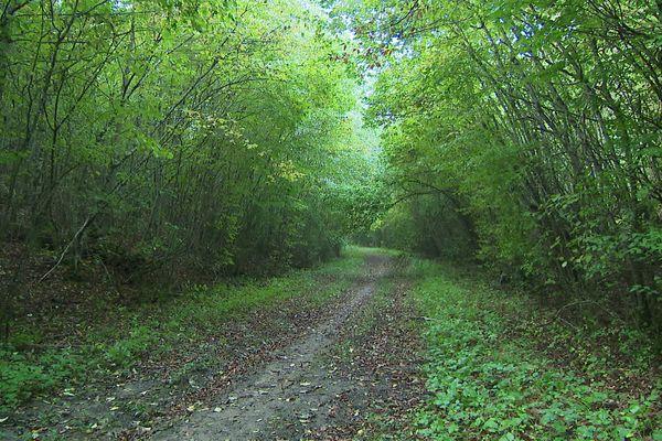 Seul un sentier permet de traverser de la réserve biologique intégrale de la forêt de Haye. Il est interdit d'en sortir, afin de permettre à la forêt d'évoluer librement, sans aucune intervention humaine.