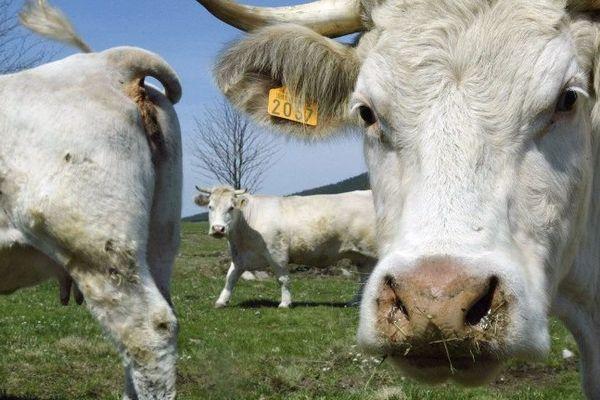 Des centaines d'exploitations agricoles françaises sont en difficulté