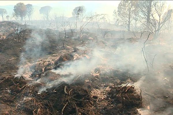 L'incendie de Millas (Pyrénées-Orientales) du 16 juillet 2019