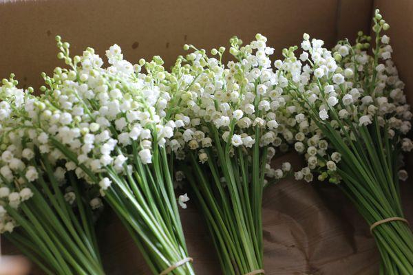 Le 1er mai célèbre la fête du travail et voit fleurir les clochettes porte-bonheur du muguet.