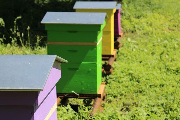 Du miel a été extrait des quatre ruches placées en mai 2018, dans le parc de la Communauté d'Agglomération du Val de Fensch