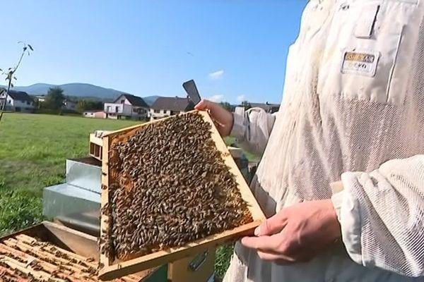 Le printemps est là, les abeilles se réveillent © Francetv