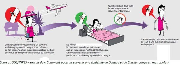 Le moustique tigre peut véhiculer la dengue en faisant circuler le virus d'une personne à l'autre.
