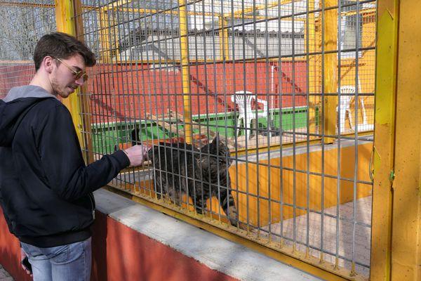"""La SPA de Montceau-les-Mines propose des """"chats libres"""". Pour celles et ceux qui n'auraient pas les moyens financiers de payer des frais de vétérinaire, l'identification peut se faire au titre du refuge. Le chat vit dehors mais peut-être nourrir par un(e) habitant(e) d'un quartier."""