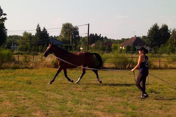 35 chevaux et poneys vivent au centre équestre du Marais.