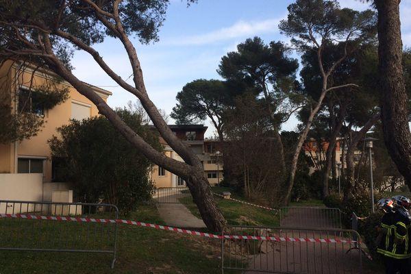 Montpellier, avenue du Père Soulas : un arbre déraciné par le vent menace de s'effondrer. 6/03/2017
