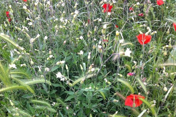 C'est le printemps en Languedoc Roussillon