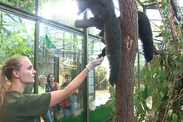 site rencontre zoo)