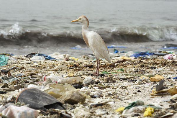 Cette photo prise le 2 juin 2018 montre un oiseau debout sur une plage couverte de déchets, dont de nombreux objets en plastique, dans la baie de Hann à Dakar.