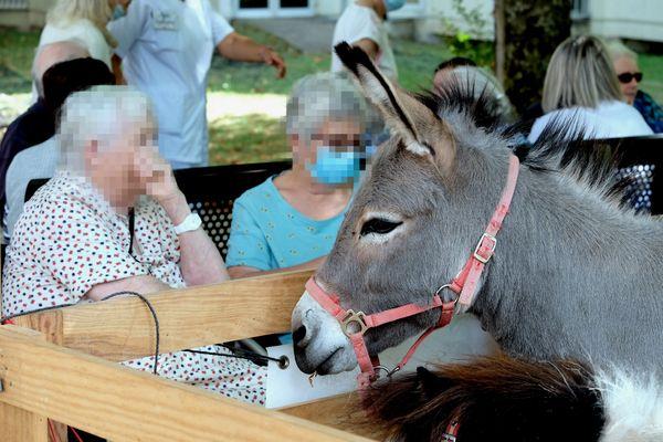 Les patients de l'hôpital nord Louise-Michel de Clermont-Ferrand ont apprécié la compagnie des animaux.