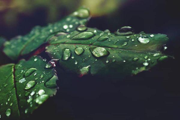 Et toujours de la pluie