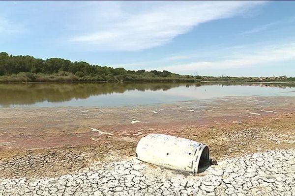 En se retirant, l'eau laisse place à de la boue, véritable piège pour les oiseaux