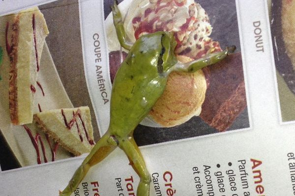 Une cliente dit avoir trouvé cette grenouille dans une salade servie samedi dernier au Buffalo Grill de Lomme.